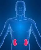 Νεφρά και Διαβήτης